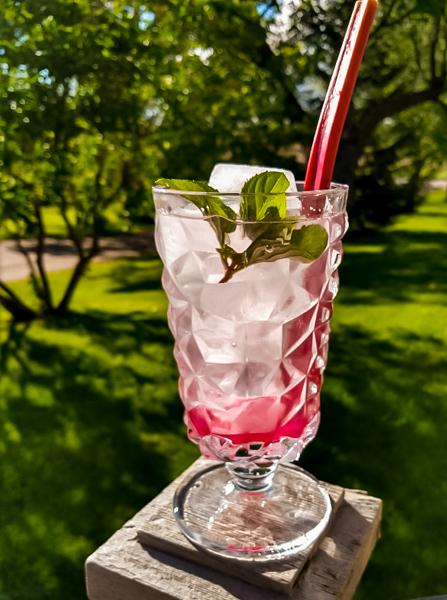 rhubarb shrub drink