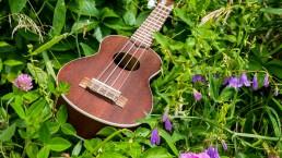 ukulele in flowers