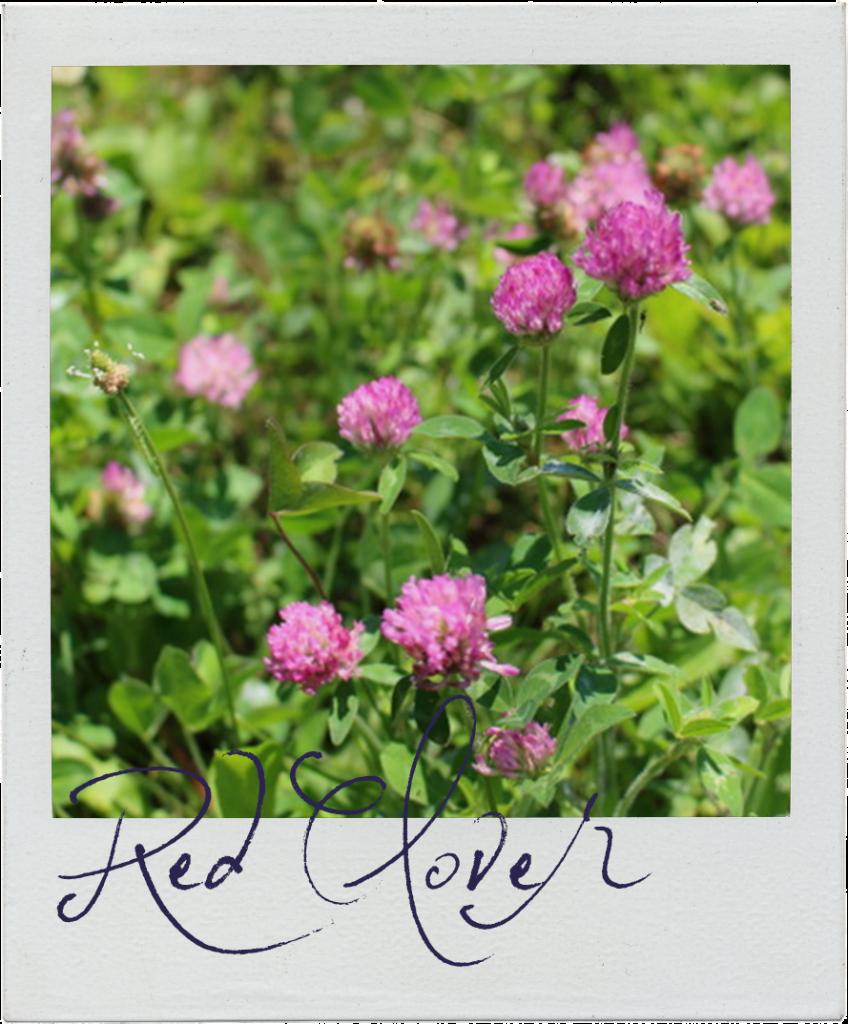 red clover polaroid frame