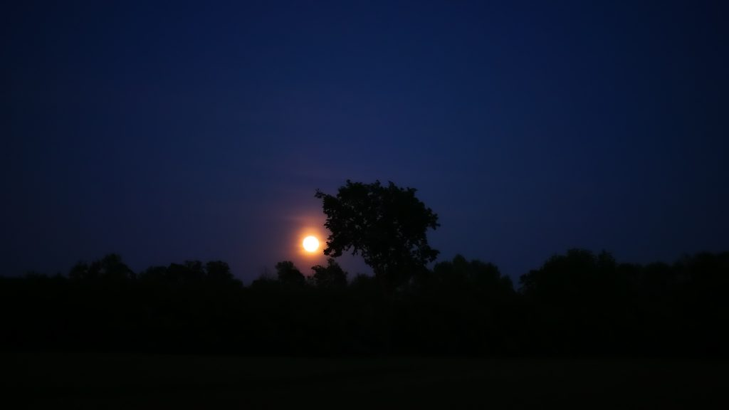 Moonlight at Dusk by Serena